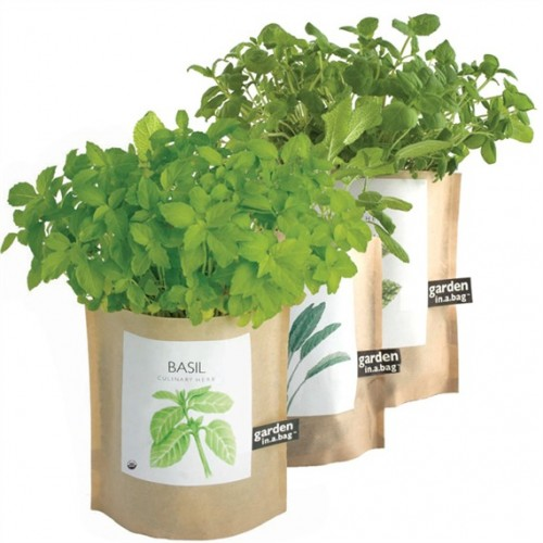 Garden-in-a-Bag Organic Herb Collection